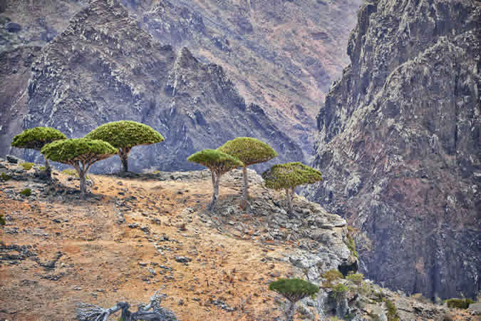 île de Socotra Yémen