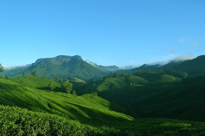 plantations de thé de Munnar